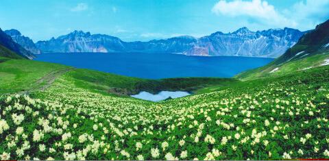 天池之上花团锦簇   肖鸣摄