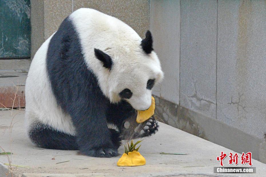 2月2日,春节将至,天津动物园的营养师们,为园区内的动物们准备了蔬菜