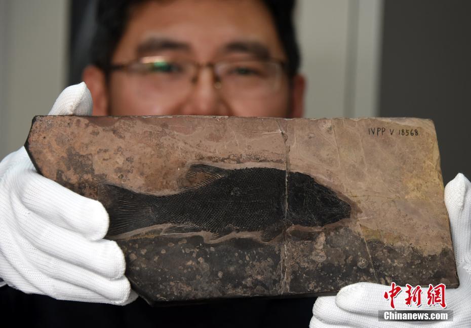 中国发现世界最早铰齿鱼类新属种 科学家将综合研究
