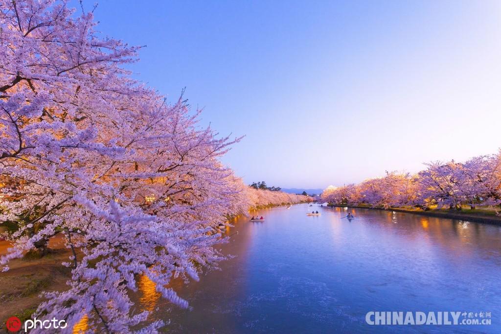 东京樱花图片风景