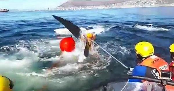 最终救援人员发现这头鲸鱼时,它的身体已经被6根绳子缠绕,尾部被3根绳