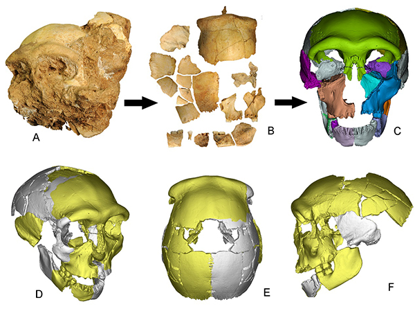 科学家发现向早期现代人连续演化的更新世中期人类头骨化