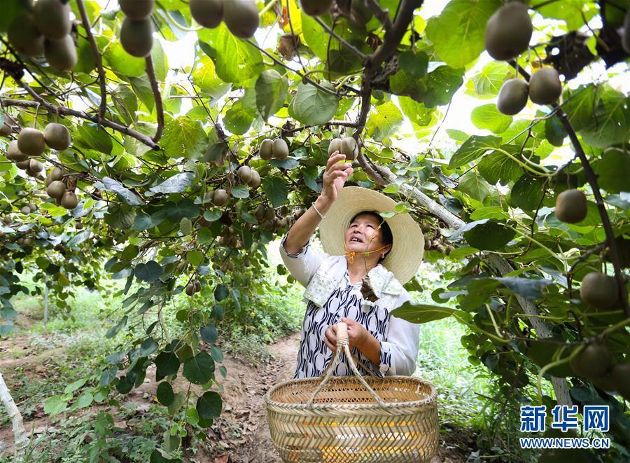 (经济)(1)江西庐山:产业扶贫促增收