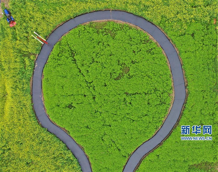(经济)(2)张北坝上打造田园综合体