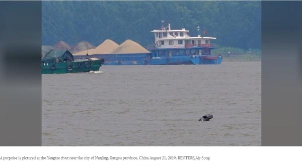【中国那些事儿】守护长江江豚?外媒:中国保护长江生态不遗余力