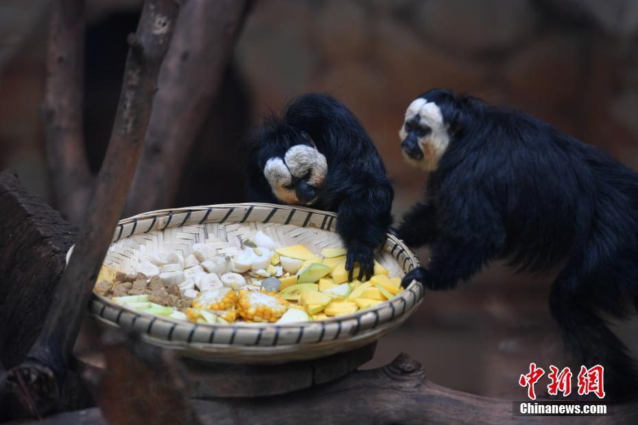 白面僧面猴来到云南与游客见面