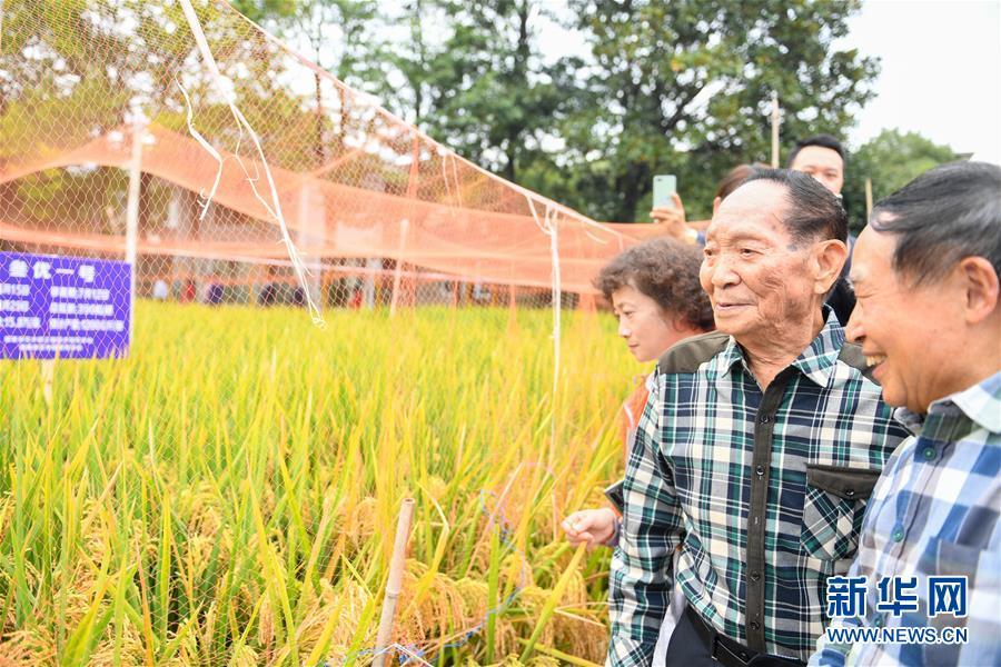(图文互动)(4)1046.3公斤!袁隆平第三代杂交水稻首次公开测产