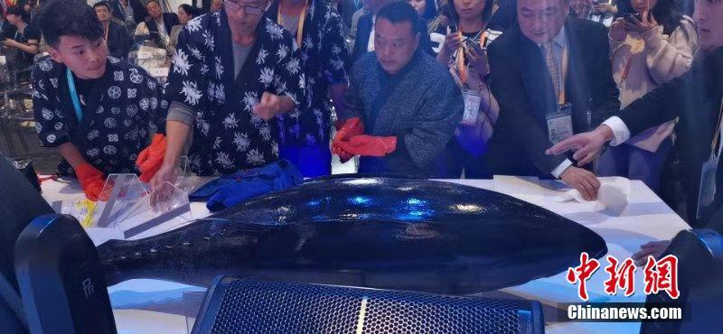 鲜美鱼肉令人垂涎,250公斤蓝鳍金枪鱼亮相进博会