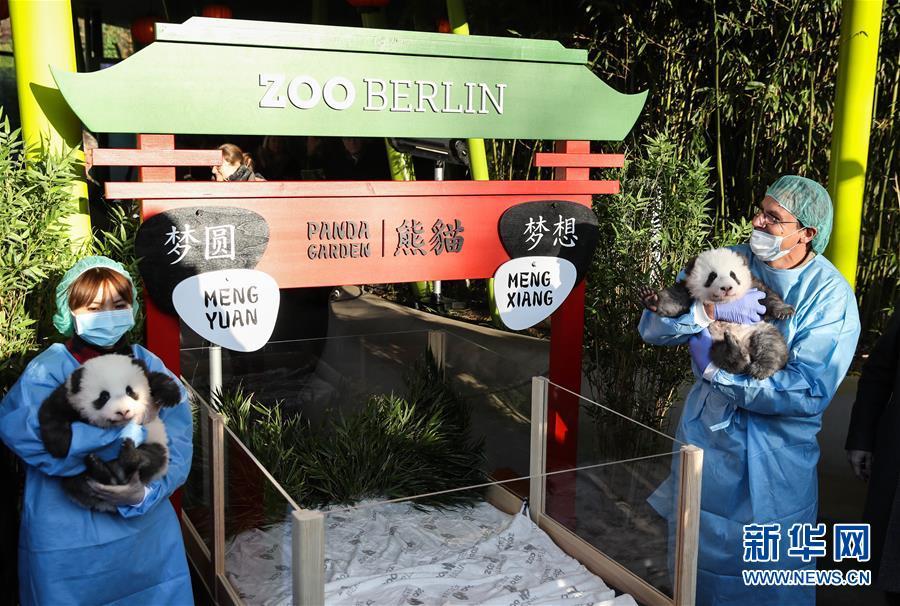 """(国际)(4)在德出生大熊猫双胞胎命名为""""梦想""""""""梦圆"""""""