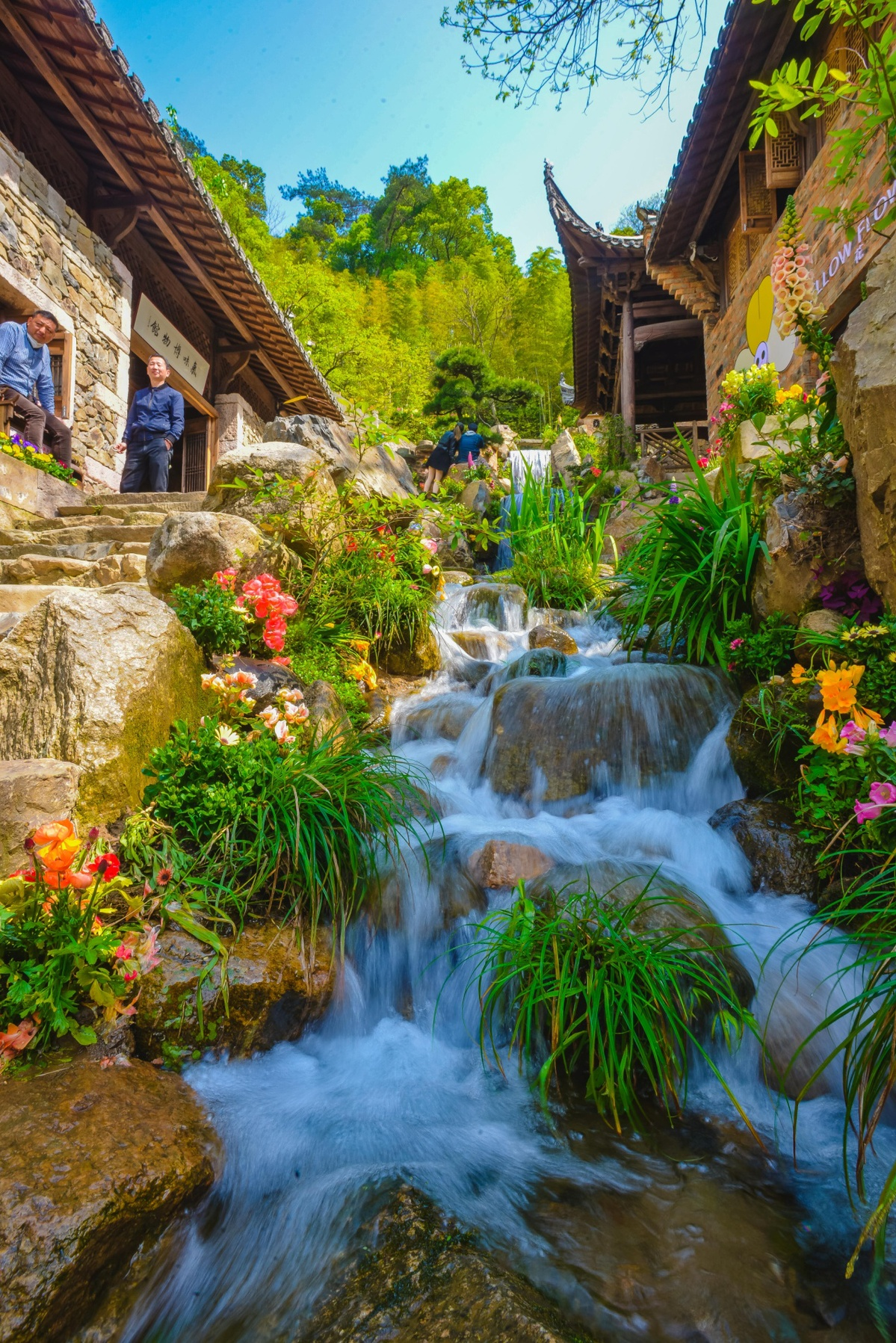 江西上饶婺源篁岭的鲜花小镇4.0盛装上线,把万亩梯田的春天转移到百年古村内