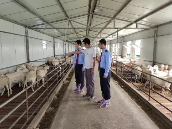 税务助产甘肃环县羊肉首次出口阿