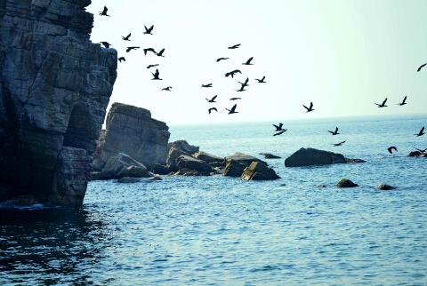 岛礁成为海鸟和鱼儿的家园-鞠传江摄影