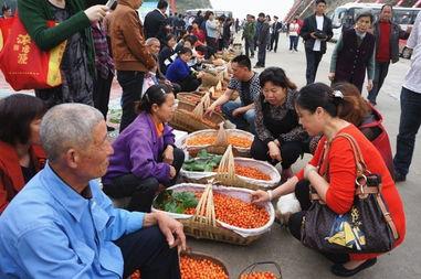 村民卖樱桃