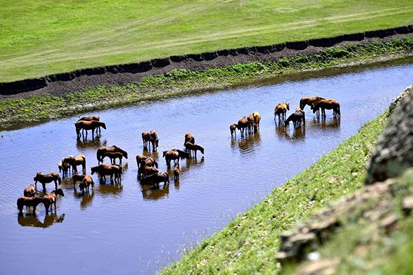 中午马群会到河里河水-鞠传江摄影