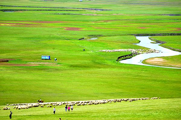 成群的羊儿在草原上-鞠传江摄影